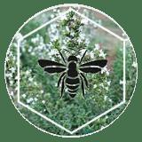 Udruga-pčelara-Duvanjski-vrisak1